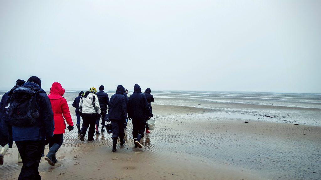 Ude i Vadehavet; Fanø østers indlæg