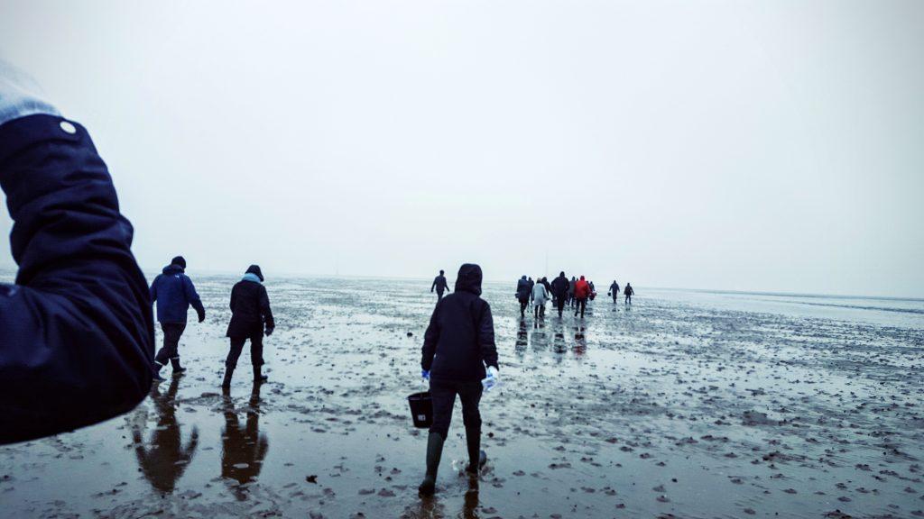 Langt ude i Vadehavet; Fanø østers indlæg