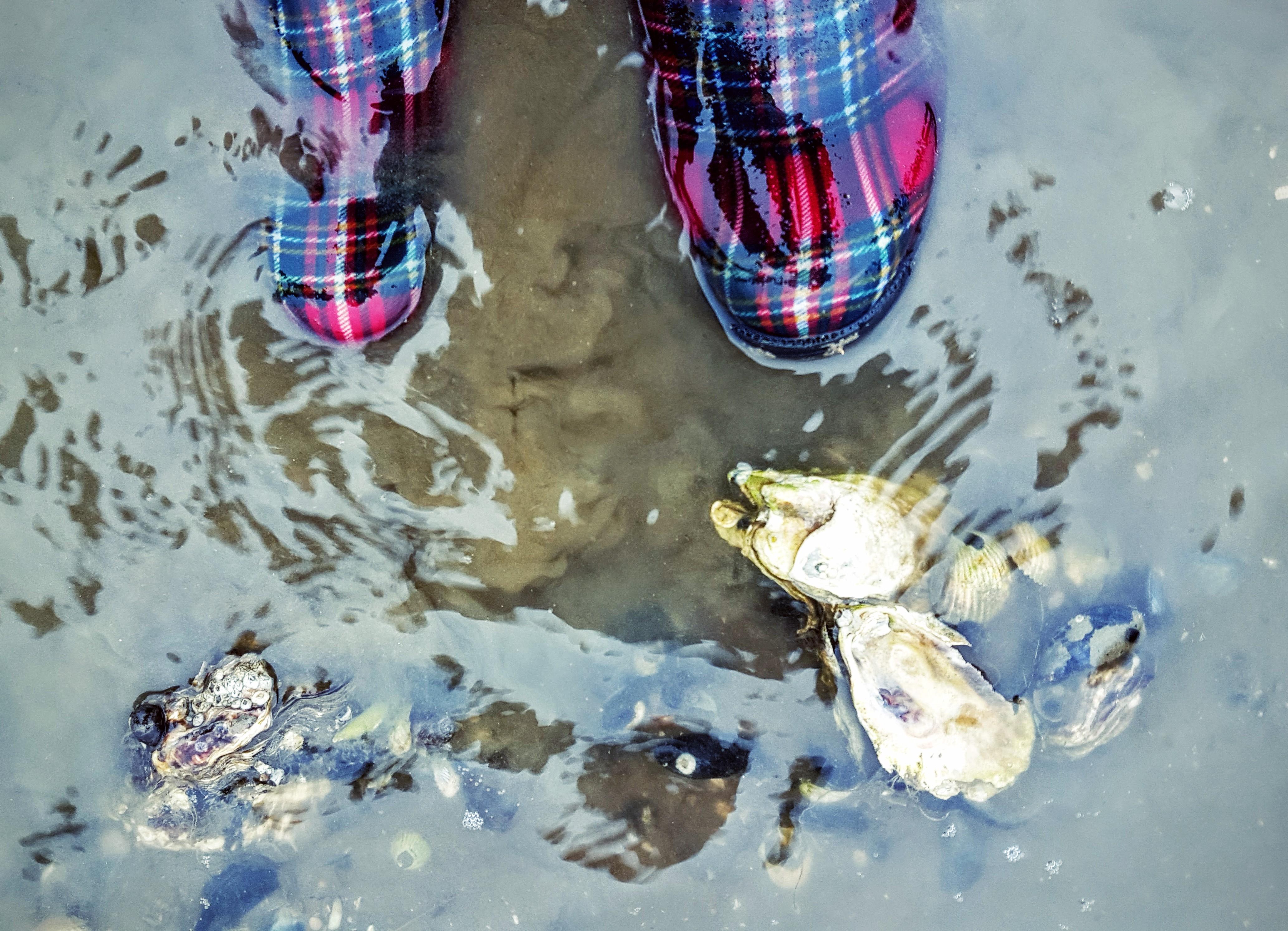 Fanø østers - tartan Tommy Hilfiger gummistøvler